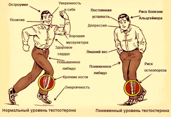 Для повышения либидо для мужчин