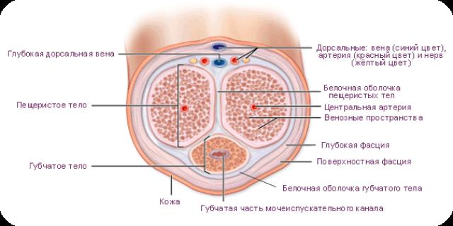 Фаллоимитатор вагина клитор анус одновременно заказать — photo 6
