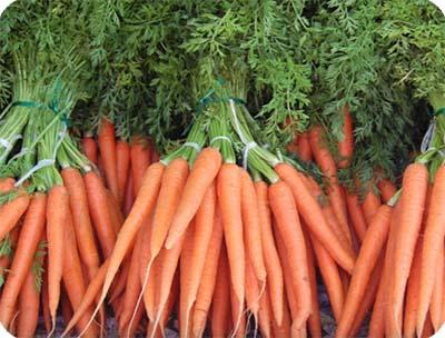 молодые плоды свежей морковки