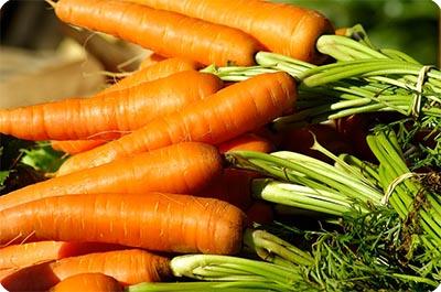 спелые плоды моркови
